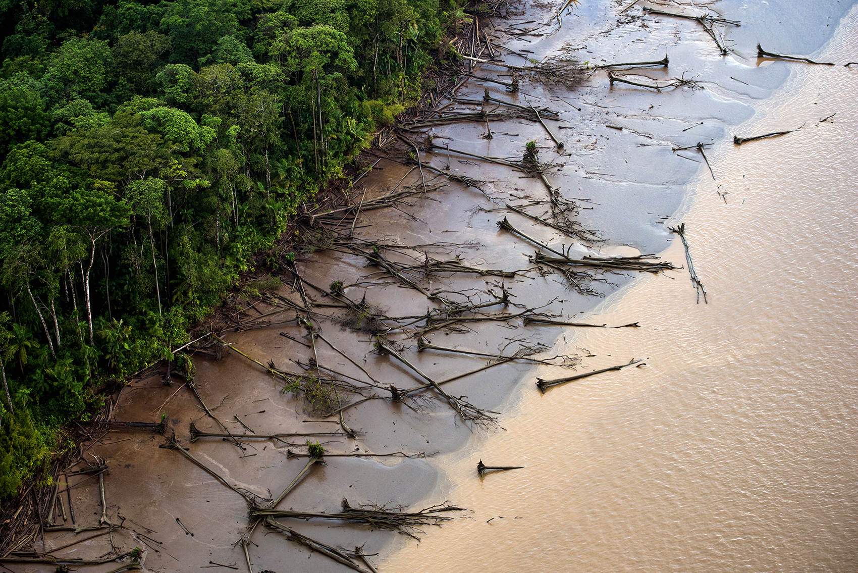 The Amazon Rainforest is Falling Faster