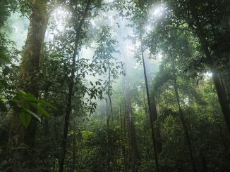 Want to Fight For The Rainforests Effectively? Here's Where to Donate