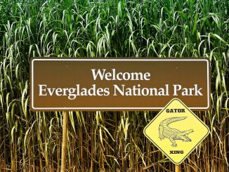 The Everglades Wetland is Extremely Sensitive to Climate Change