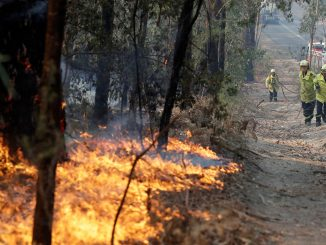 Many Species May Have Been Extinct By The Fires in Australia