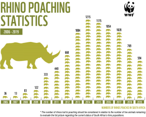 All Fewer Thief-Shot Rhinos in South Africa